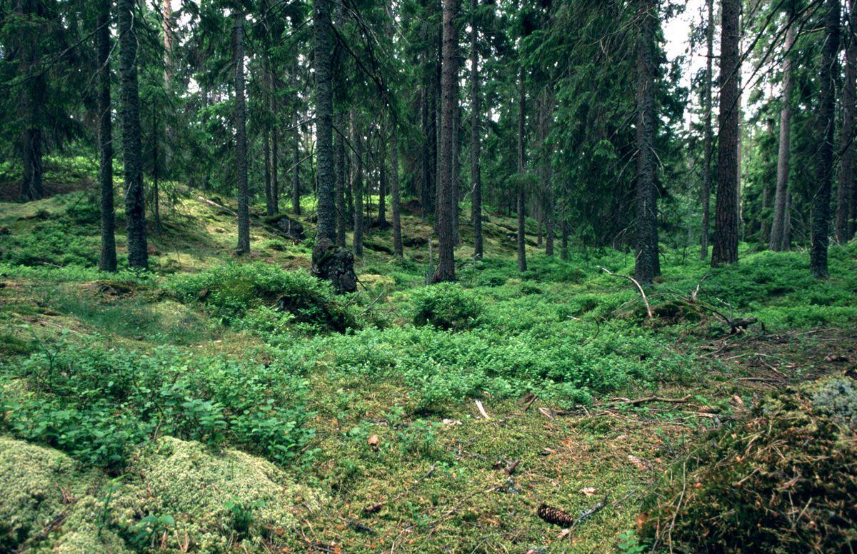 Træfiberisolering er et grønt og praktisk valg