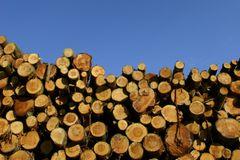 Grøn Tænketank: Træ i byggeri kan gemme på miljømæssige faldgruber
