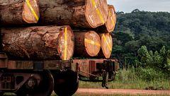 FSC: CSR-strategier og Verdensmål på træ kræver altså dokumentation
