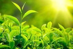 KU: Dansk gennembrud: Sollys kan lave kemikalier og energi
