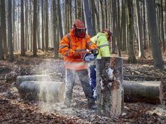 Synliggør bæredygtighed i virksomheden med FSC og PEFC