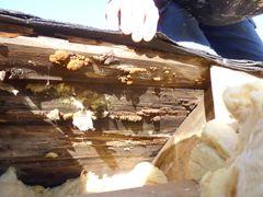 Lavtox: Naturlige salte opsøger selv svampe- og insektlokkende fugt