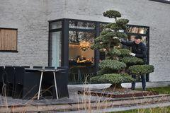 Store og ældgamle bonsai til Have & Landskab