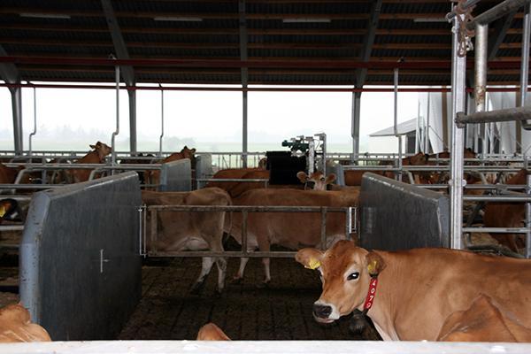 Kanalelementer til kvægstalde
