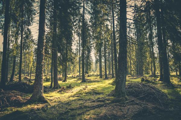 Saga Wood lancerer nye produkter på dette års Building Green