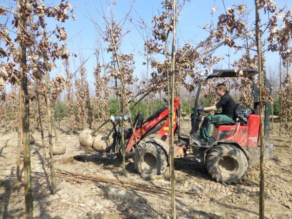 Grøn indkøbsbegejstring støvsuger plantemarkedet