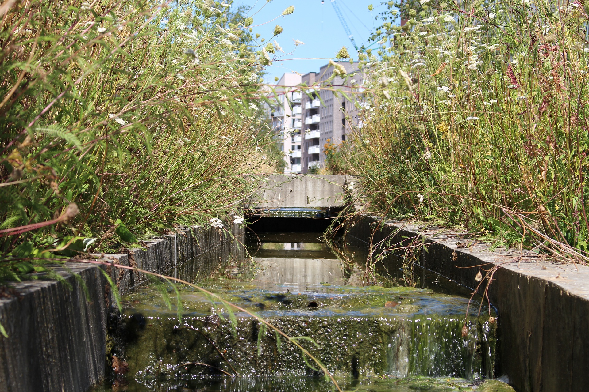 Eksperter i biodiversitet i moderne byggeri