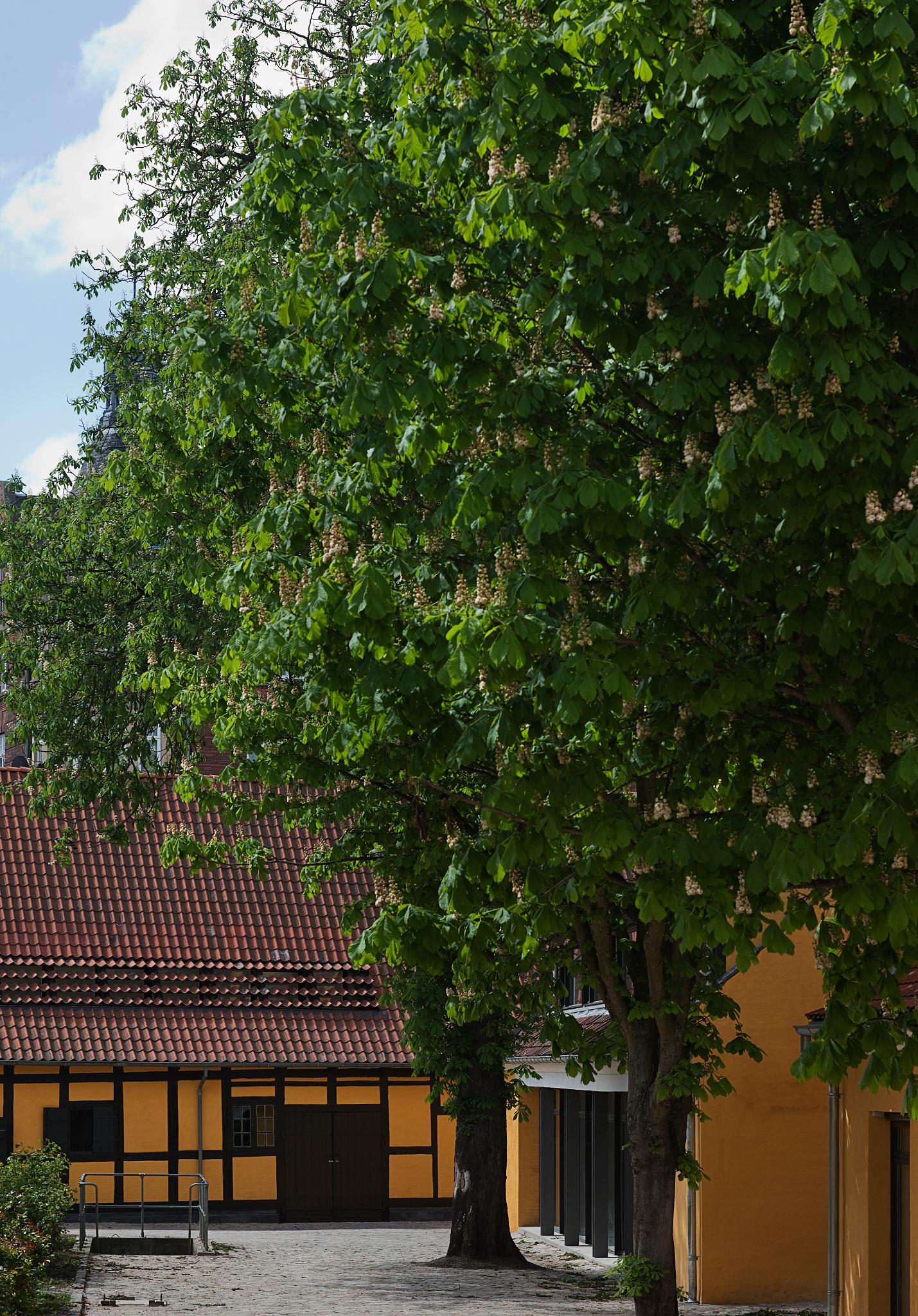 Fæstningen_kig mod bygning 9 og 11_LG