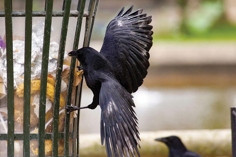 fugle-affald