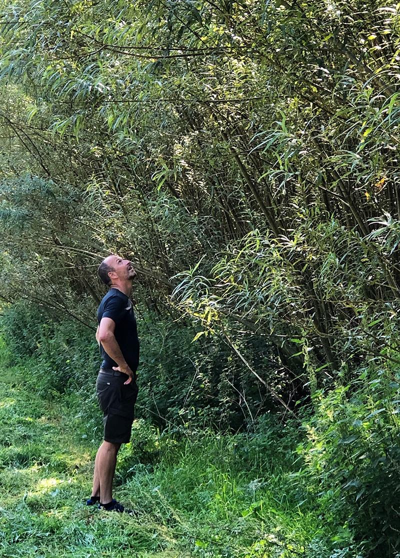 Johannes Falk besigtiger klimaskov - hurtigtvoksende piletræer  der anvendes i grønne støjskærme