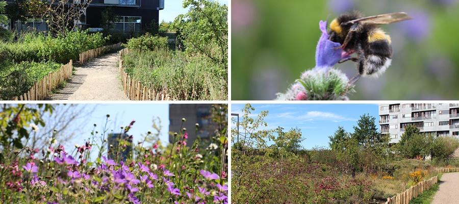 'Eksperter i biodiversitet i moderne byggeri'